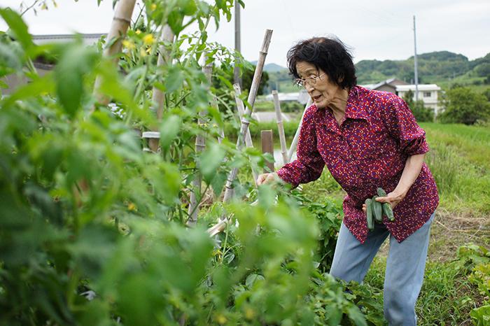 【おいしい野菜の秘密】なんでおばあちゃんが作った野菜はおいしいの?